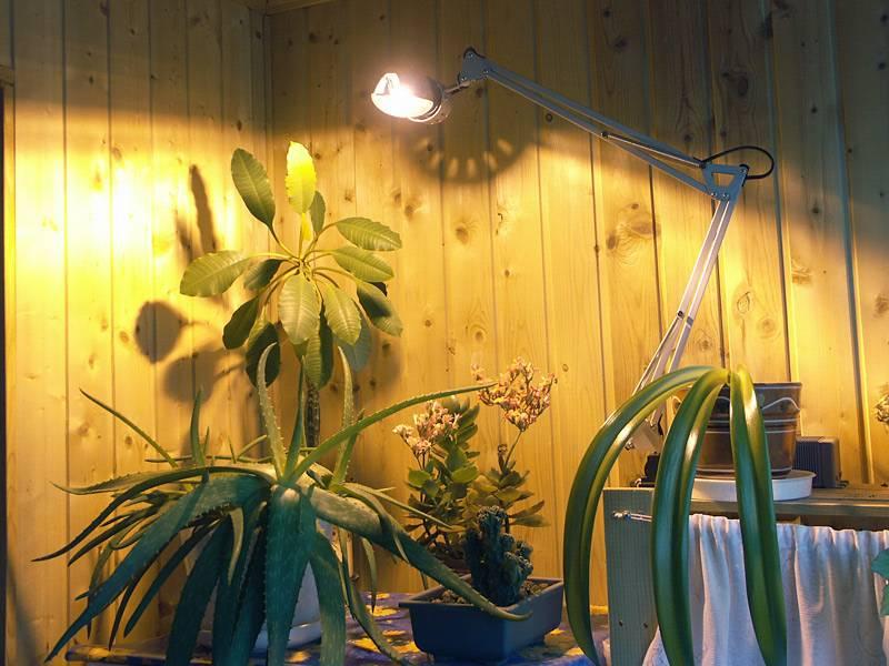 Лампы для рассады на подоконнике: как и какую выбрать