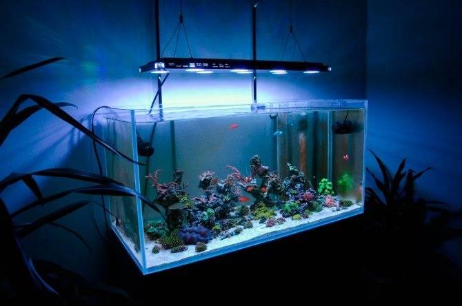 Время освещения аквариума - 3 правила продолжительности светового дня. выбор режима света.