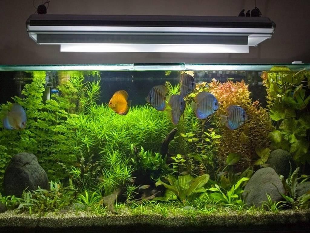 Как не ошибиться с выбором лампы освещения для аквариума