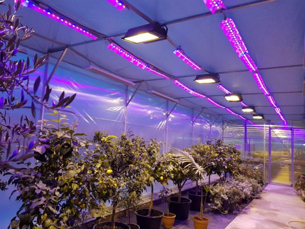 Освещение для растений, какой свет нужен домашней флоре и как выбрать подходящую лампу - 15 фото