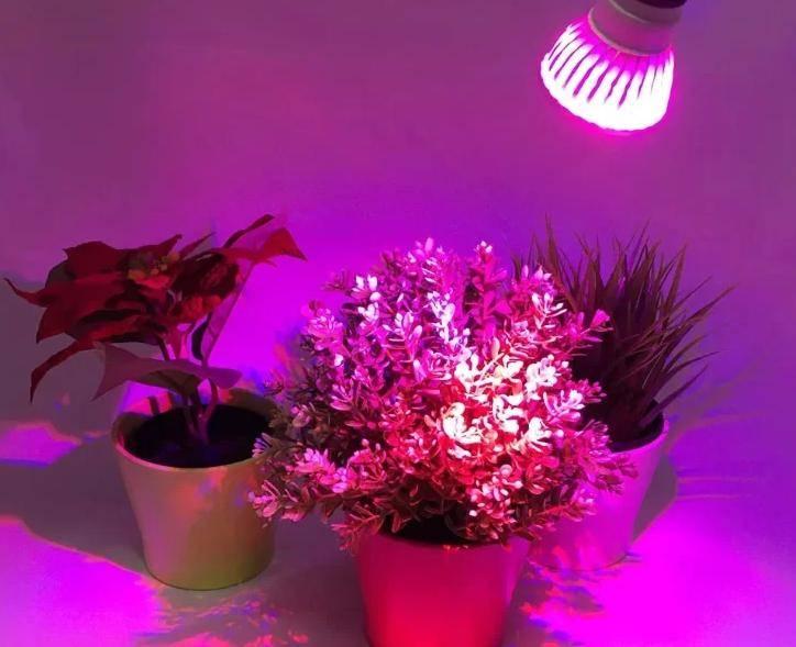 Топ–8 лучших ламп для роста растений: правила выбора фитолампы