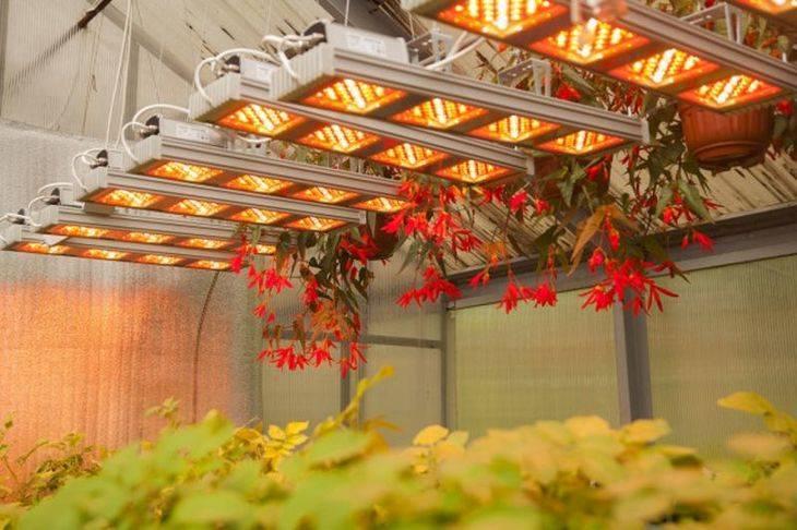 Фитолампы для теплиц: какие выбрать лампы для растений в теплицу и сделать свет 12 вольт, фитолампы для зимних теплиц для выращивания растений - отзывы видео, рассчитать освещение в теплице (мощность)