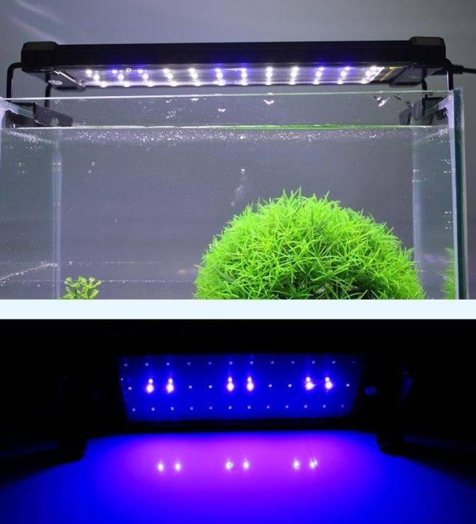 Освещаем аквариум светодиодными лампами