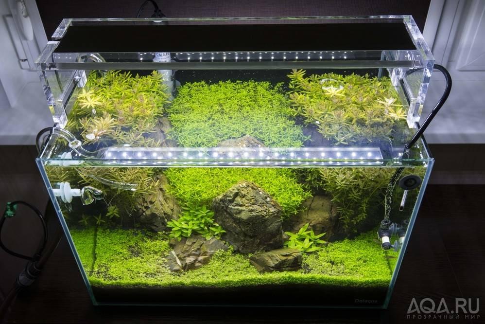 Аквариумные лампы и светильники: виды, требования и характеристики