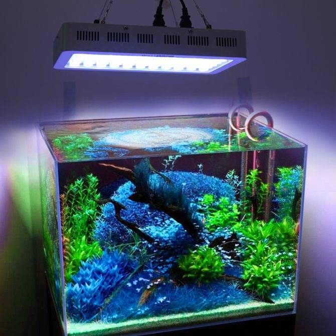 Светодиодный светильник для аквариума выбор и как установить