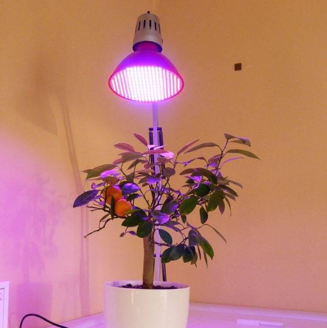 Фитолампа для растений: 3 схемы   блог домашнего электрика