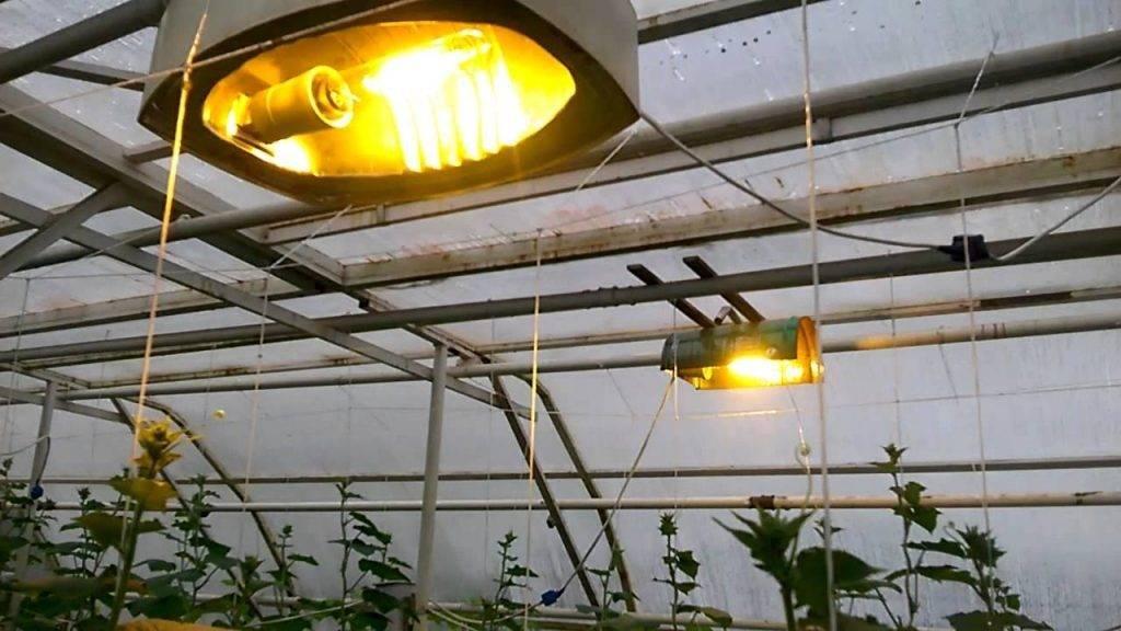 Обзор профессиональных led ламп для теплиц, инфракрасных, энергосберегающих, примеры как рассчитать освещение в теплице, выбор ламп для зимних построек