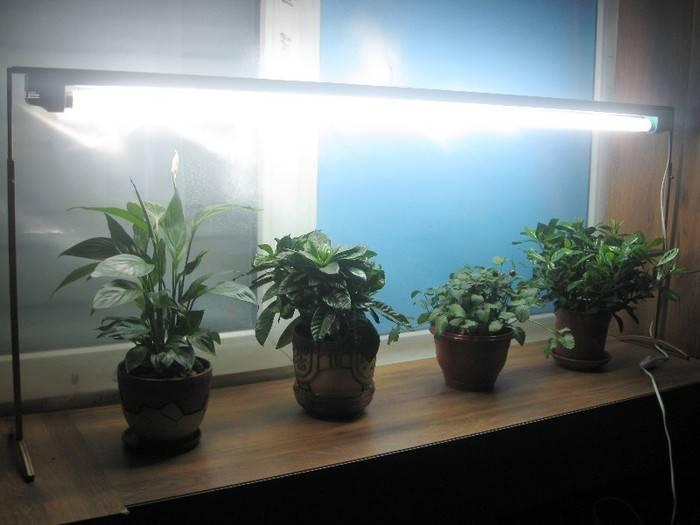 Как подсвечивать рассаду на подоконнике: какую лампу выбрать для досветки в домашних условиях, а также о правильном освещении саженцев на окне зимой