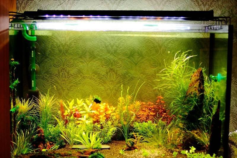 Правильное освещение для аквариума: выбор ламп