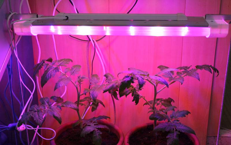 Правильные лампы для подсветки цветов и растений