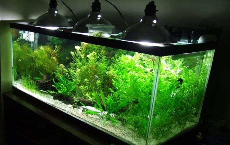Освещение для аквариума, светодиодное и энергосберегающее, какой лучше свет для растений и рыб, нужен ли он вообще и сколько нужно, а также расчет своими руками