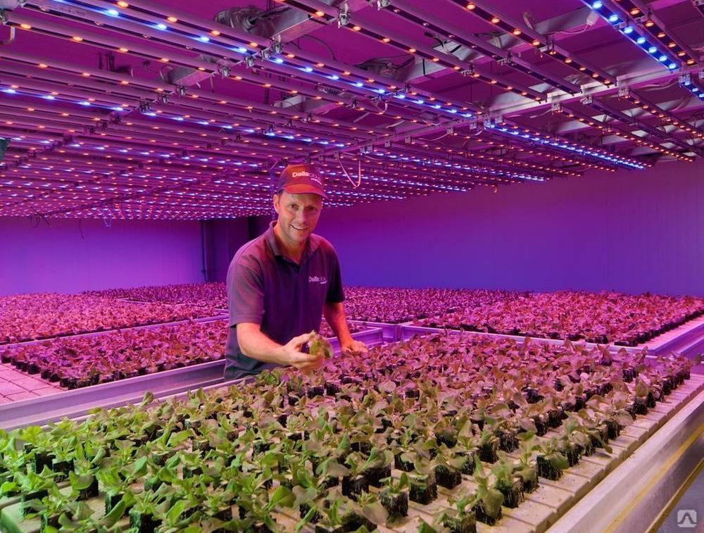 Каким должно быть освещение для растений в теплице