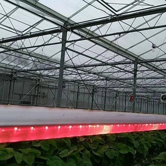 Выращивание клубники в теплице круглый год: выбор сорта, технология как вырастить
