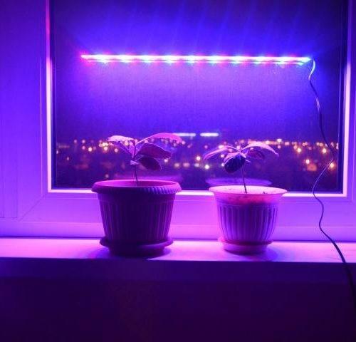 Как правильно выбрать фитолампу для досветки комнатных растений зимой и рассады весной? на supersadovnik.ru