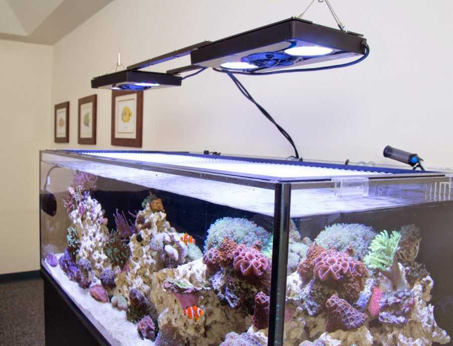 Освещение аквариума: какое должно быть освещение в аквариуме