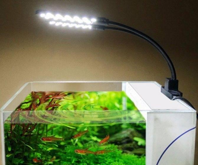 Подбираем освещение для аквариума, чтобы обитателям и растениям было комфортно