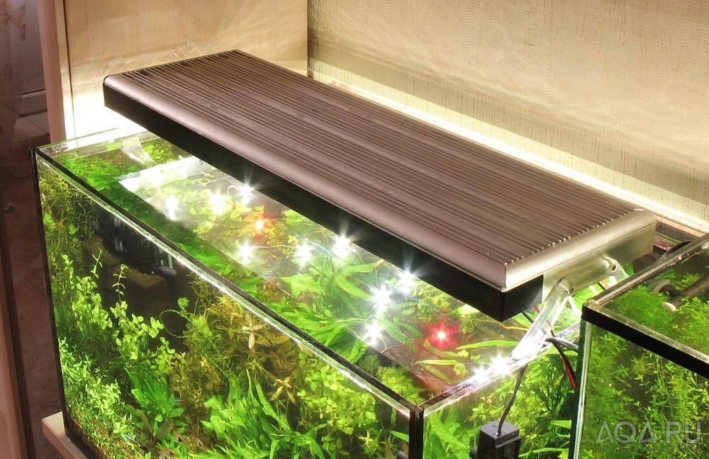 Освещение аквариума светодиодными лампами: как выбрать лампу на крышку