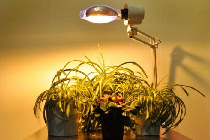 Применение, виды и характеристики ламп для комнатных растений