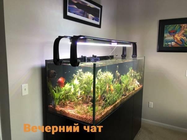 Правильный расчет и изготовление светодиодной подсветки аквариума своими руками