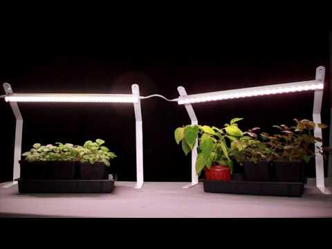 Для того, чтобы урожай радовал, узнайте все о подсвечивании рассады на подоконнике