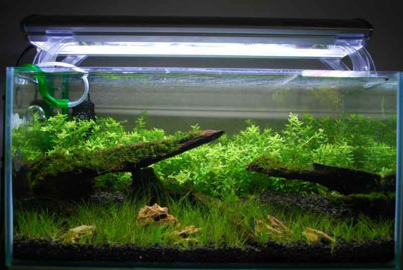 Лампы и светильники для аквариума: как установить, какие выбрать, рейтинг