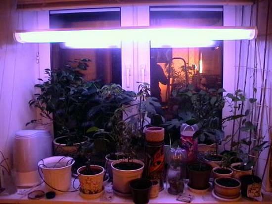 Лампа для выращивания растений в домашних условиях: нужна ли для роста комнатных цветов, на сколько ее включать, как правильно выбрать и пользоваться уф светильником?