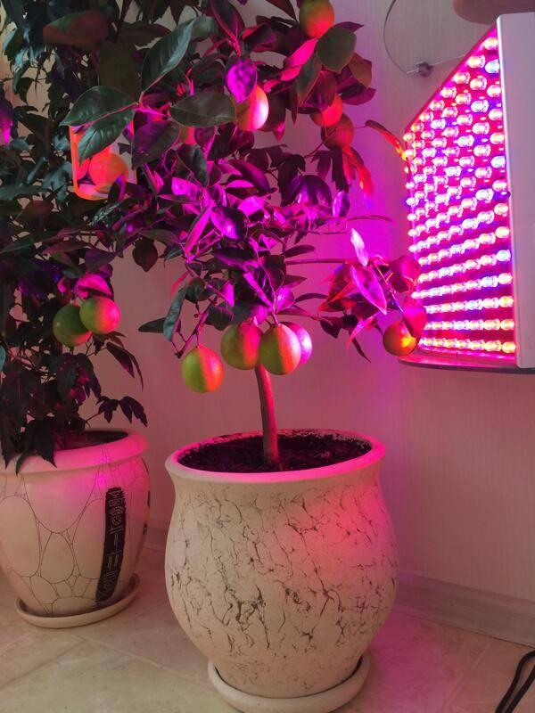 Лампа для комнатных цветов: для чего нужно дополнительное освещение, как выбирать фитолампы и как правильно устанавливать подсветку для растений