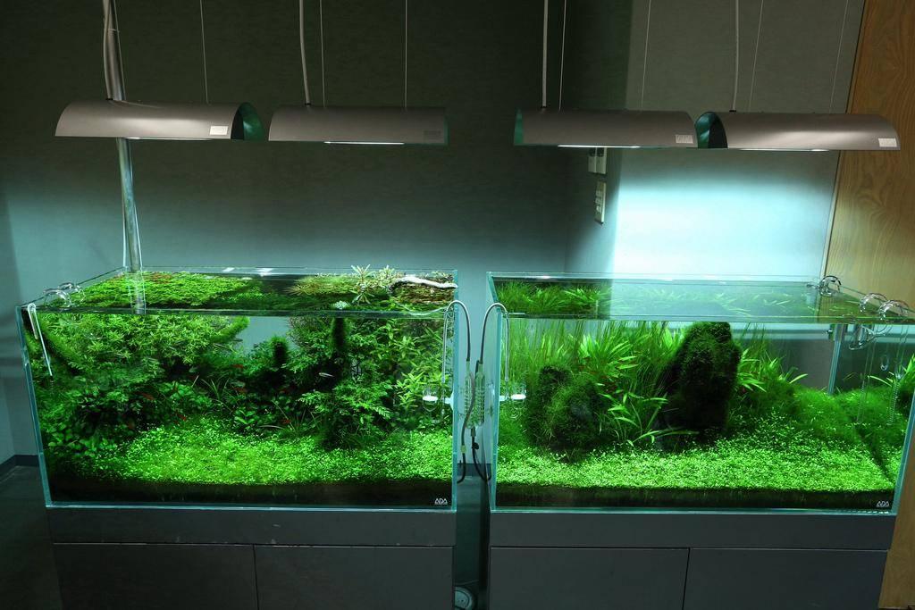 Рейтинг лучших ламп для аквариума на 2021 год