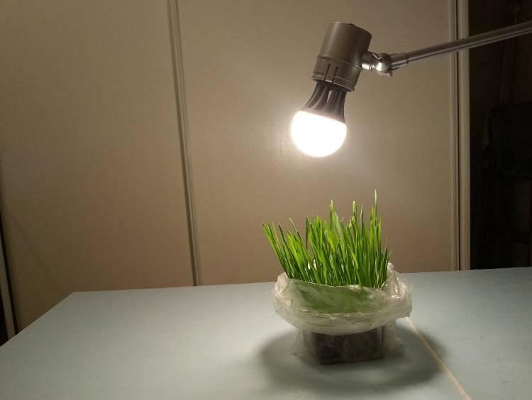 Освещение для растений — все что нужно знать простыми словами.