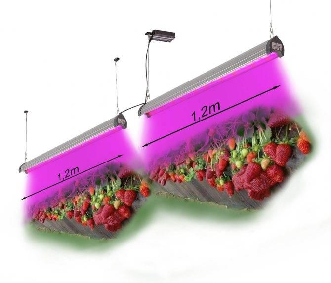 Организация систем освещения для тепличных хозяйств