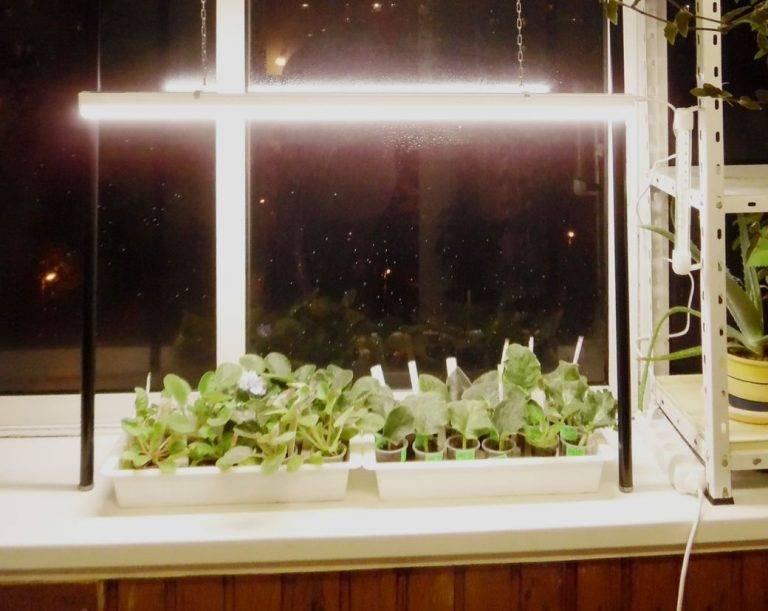 Какое освещение для рассады лучше выбрать