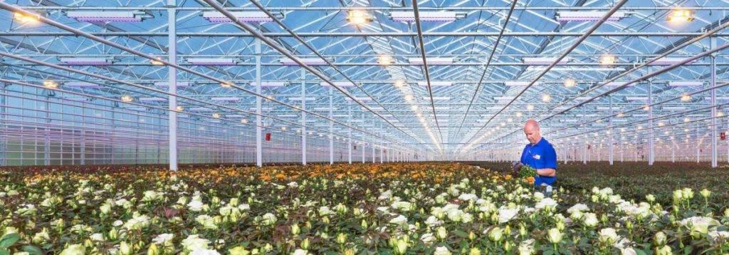 Светодиодное освещение теплиц – передовые технологии в сельском хозяйстве