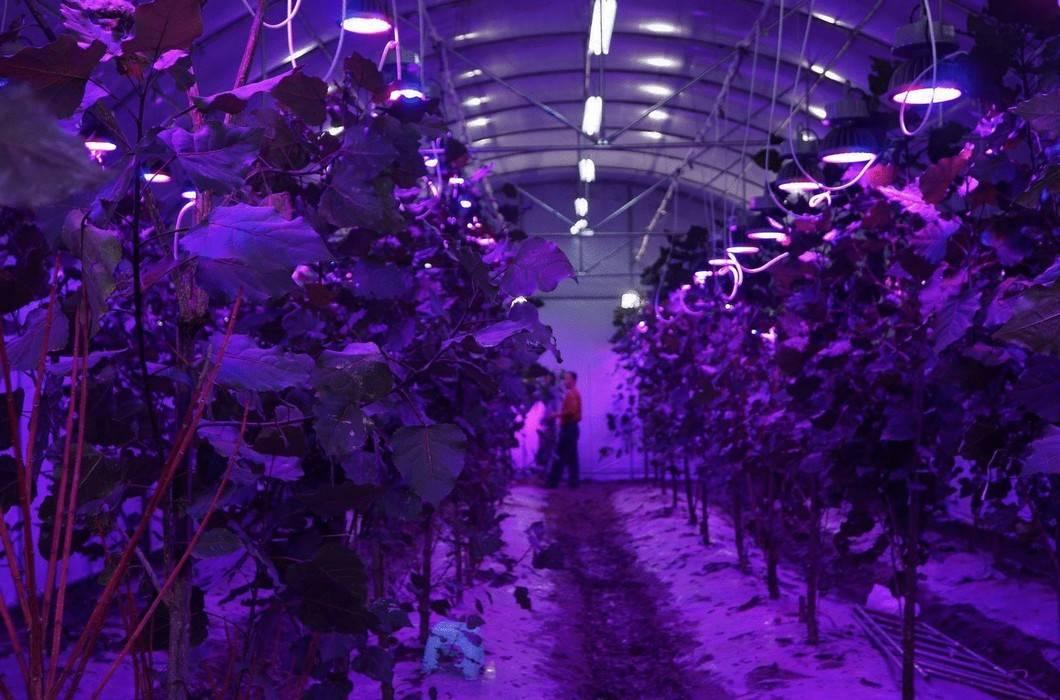 Рекомендации как выбрать освещение для роста растений в теплицах