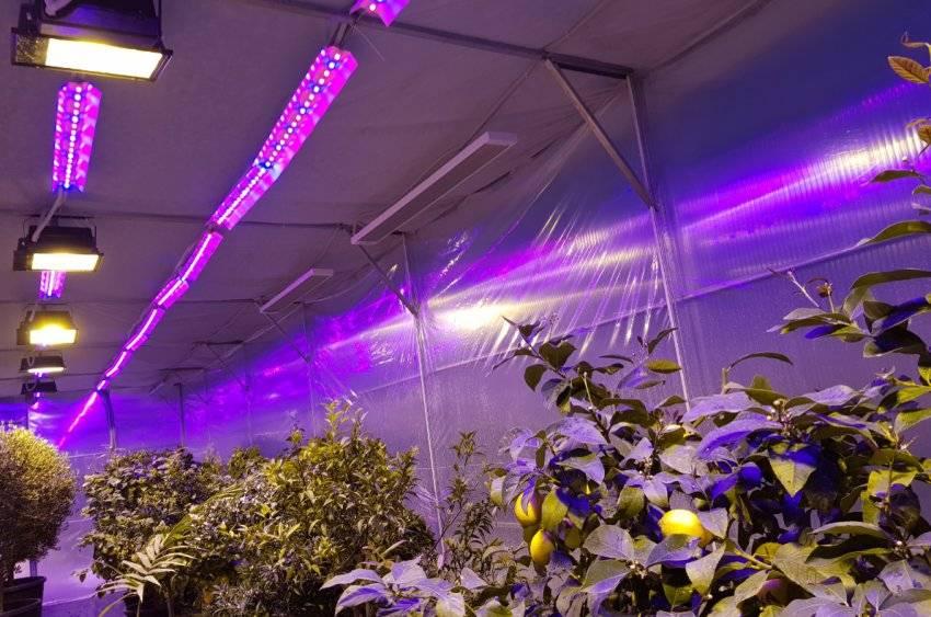 Промышленное выращивание клубники в теплице круглый год
