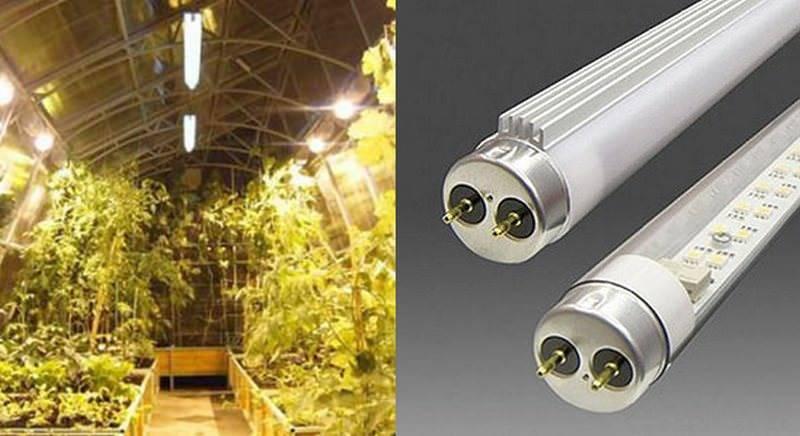 7 популярных ламп для теплицы