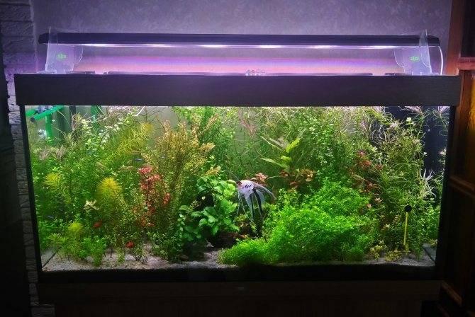 Делаем светодиодное освещение аквариума