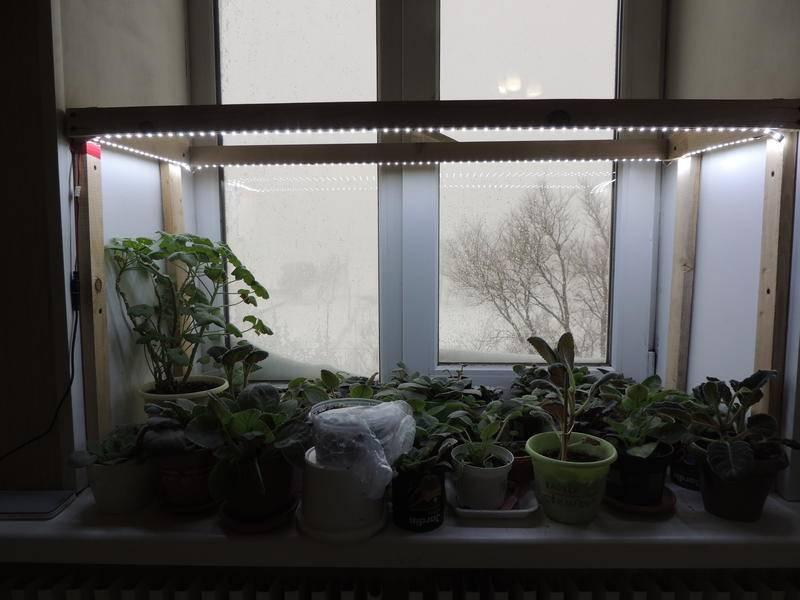 Лампы для растений, освещение и подсветка - фото примеров