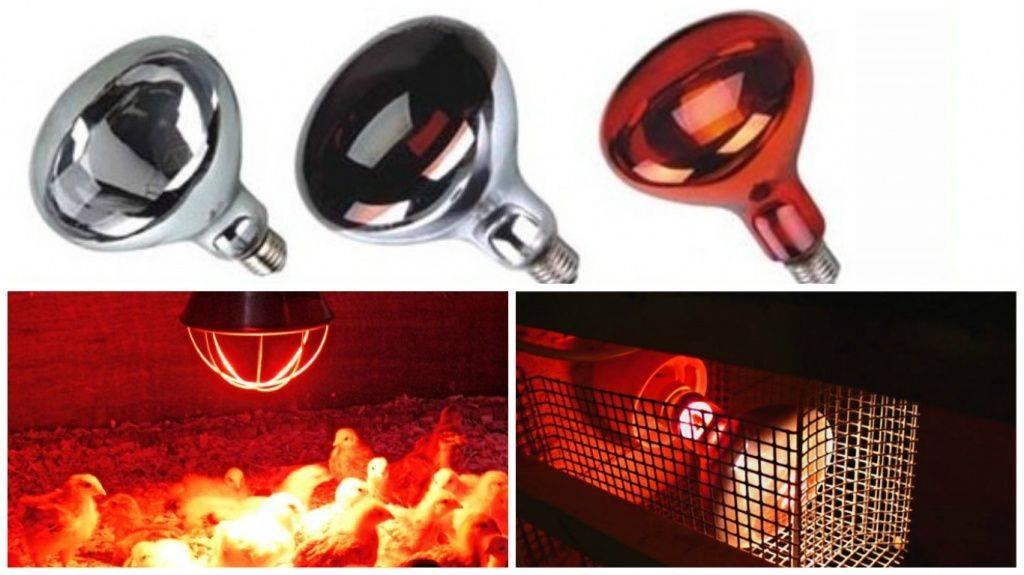 Инфракрасные лампы для обогрева курятника: как установить и обогреть зимой кур красной лампой