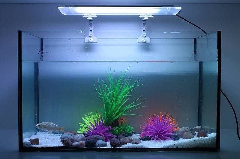 Правильное освещение аквариума: обзор светильников.