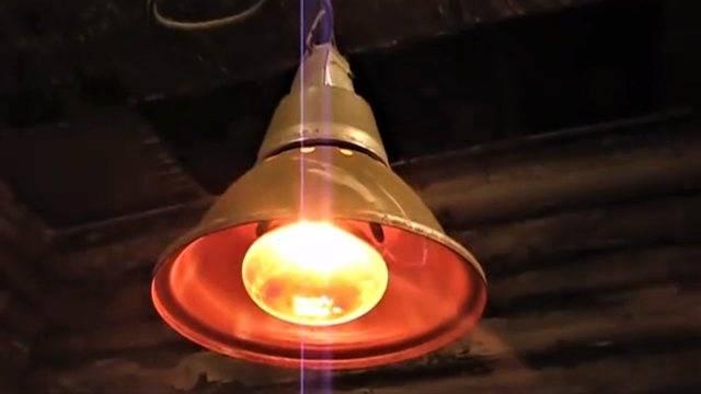 Выбор подходящей лампы для обогрева цыплят