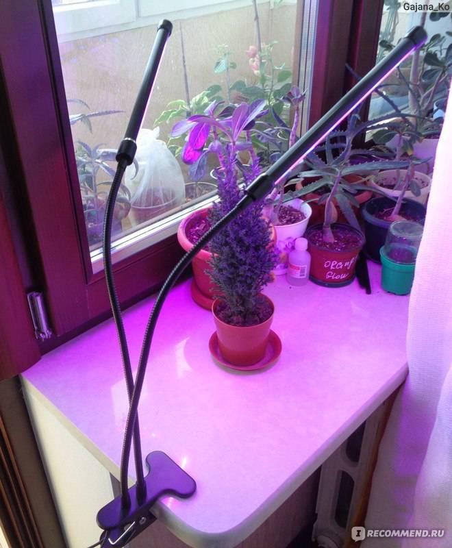 Лампа для рассады на подоконнике: какая лучше, на каком расстоянии вешать фитолампу
