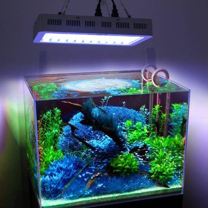 Выбор лампы для аквариума: что нужно знать, какие подходят?