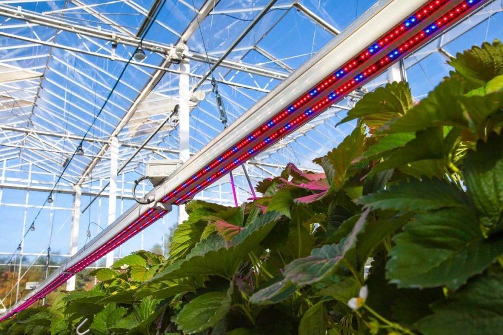 Зимняя досветка комнатных растений и рассады: как правильно выбрать фитолампу?