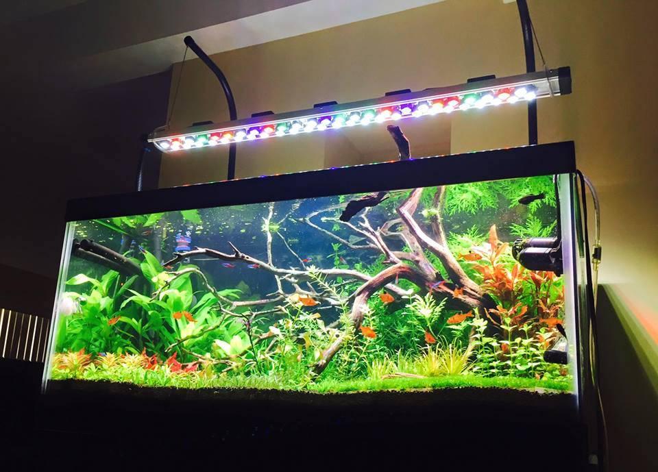Подсветка аквариума светодиодной лентой: инструкция по монтажу своими руками