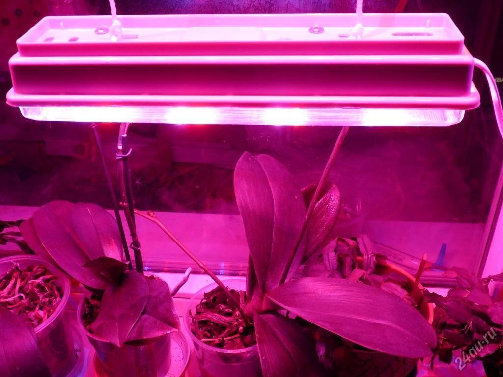 Светодиодные лампы для растений и комнатных цветов