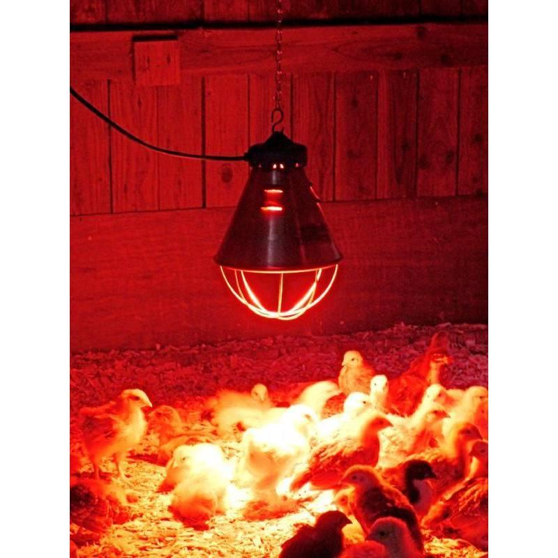 Обогрев курятника: как обогреть зимой? инфракрасные лампы