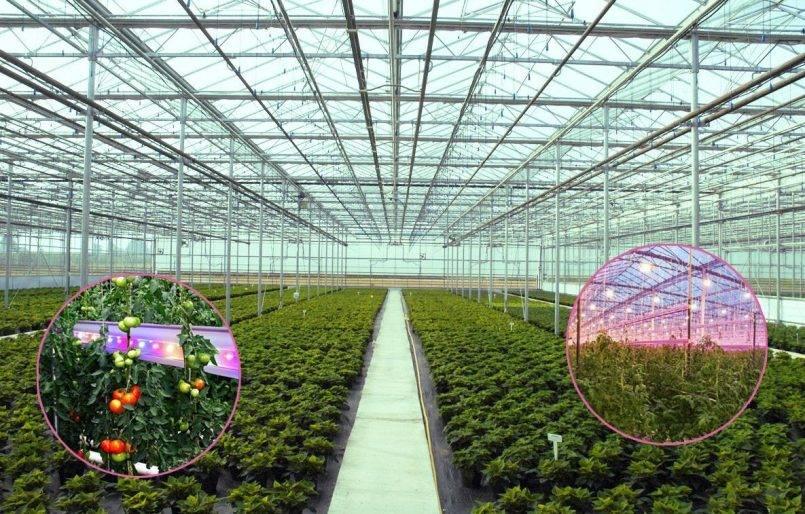 Освещение теплиц – как не погубить растения зимой?