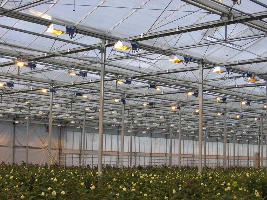 Организация освещения в теплице и выбор ламп