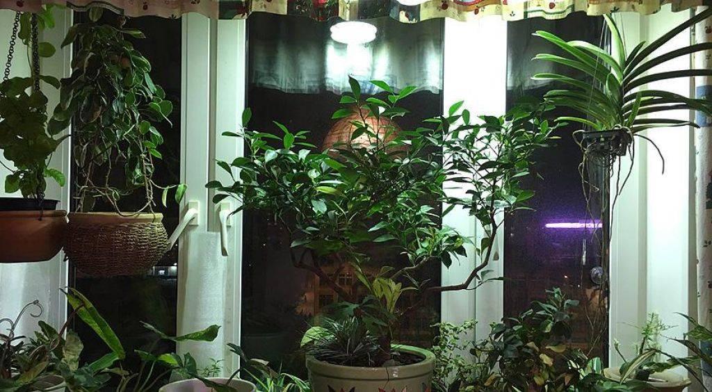 Освещение рассады в домашних условиях