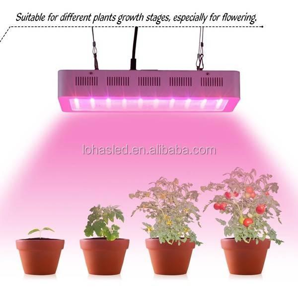 Искусственное освещение для растений - вся правда которую нужно знать. фитолампы, спектр и время освещения.